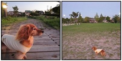 20110906 お散歩1