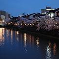 浅野川 満開のソメイヨシノ 右は主計町茶屋街