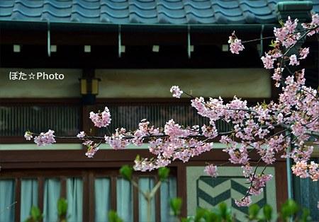 桜咲く民家