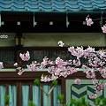 Photos: 桜咲く民家