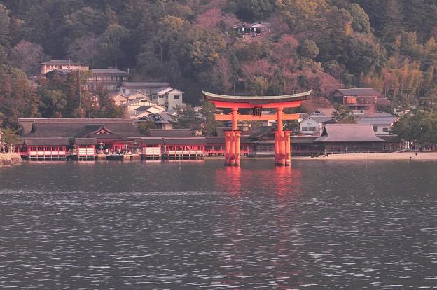 夕方の宮島鳥居と厳島神社満潮へ向けて。。