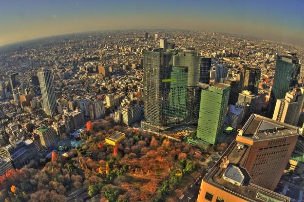 都庁展望から夕暮れの風景