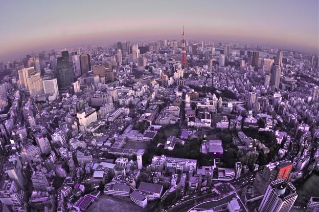 都庁からの眺め。。