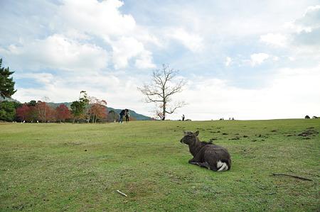 奈良公園2011秋-04