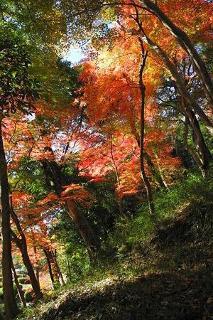 亀山公園の紅葉・2