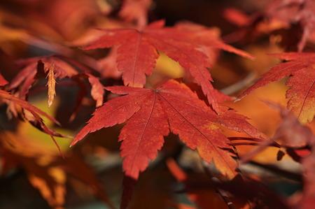亀山公園の紅葉・15