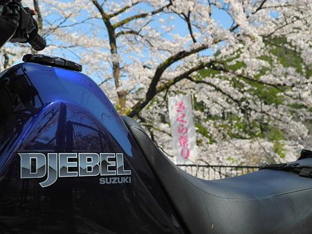 下北山村で桜ツーリング・8