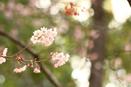春色キャンバス