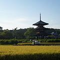 写真: 法起寺