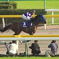Photos: 11R ワキノカイザー