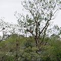 Photos: 鳥がなる木
